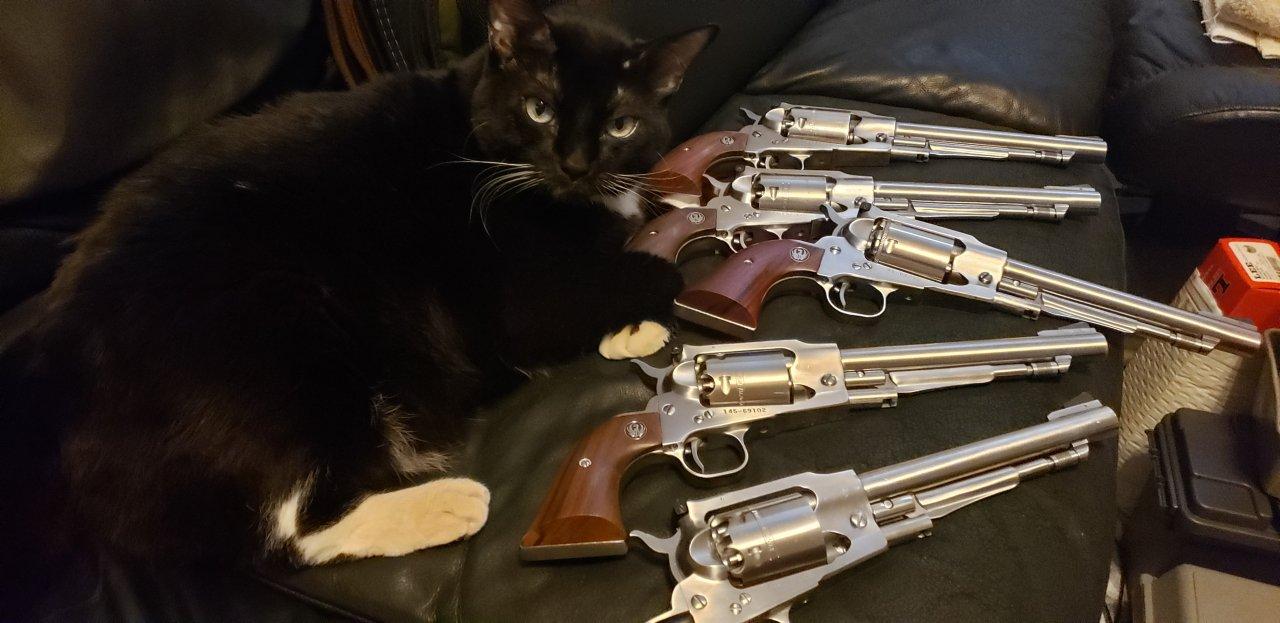 cats & guns.jpg