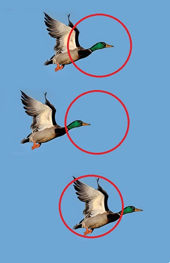 DUCK IN FLIGHT shot cones.jpg