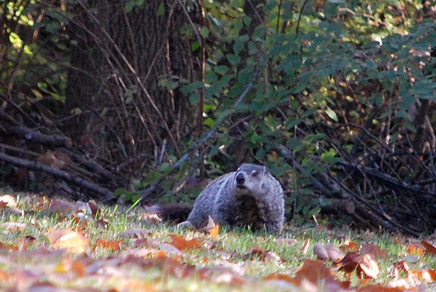 groundhog-Z1 copy.jpg