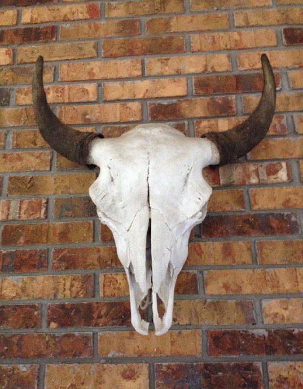 Old Bull 1.1.JPG